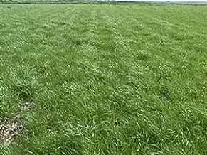 Annual Ryegrass Seed (Gulf, Diploid) - 1 Pound - Wizard Seed LLC