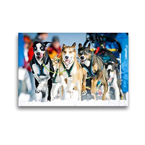 CALVENDO Premium Textil-Leinwand 45 x 30 cm Quer-Format EIN Schlittenhunde-Gespann voller Begeisterung beim Rennen, Leinwanddruck Verlag