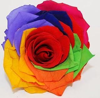 Floréate Rosa Rainbow Arcoiris preservada eterna Tallo 25