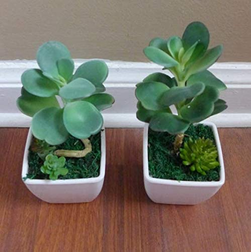 New Potted Tampa Mall Artificial Super intense SALE Desert Grass Table Home Pot with Succulent