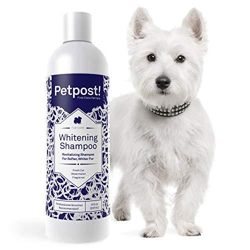 Petpost | Shampoo sbiancante per cani – Il miglior trattamento sbiancante per cani con pelo bianco – Profumo calmante di anguria – Approvato per Maltese, Shih Tzu, Bichon Frise – 474 mL