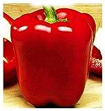 semi peperone quadrato d'asti rosso - capsicum annuum - semi agricoli - peperoni rossi - 400 sementi circa