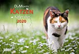 DuMonts Katzenkalender 2020 - Broschürenkalender - Wandkalender - mit Schulferienterminen - Format 42 x 29 cm: mit kurzweiligen Katzengeschichten