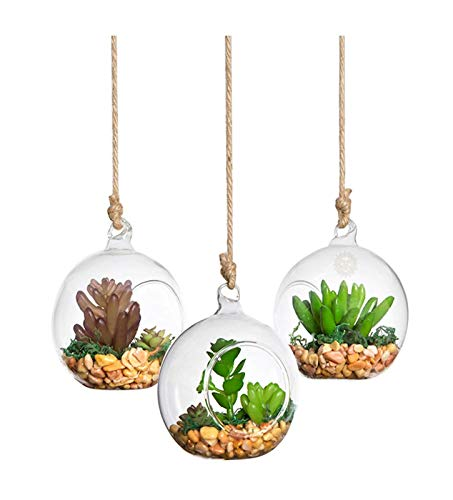 Succulents in spherical orb