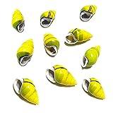 TL TONGLING Conchas 10 unids Especies Raras de Conch Shell Ventana Decoración Tanque de Peces Paisajismo Amarillo Espiral Izquierdo y Derecho Caracoles