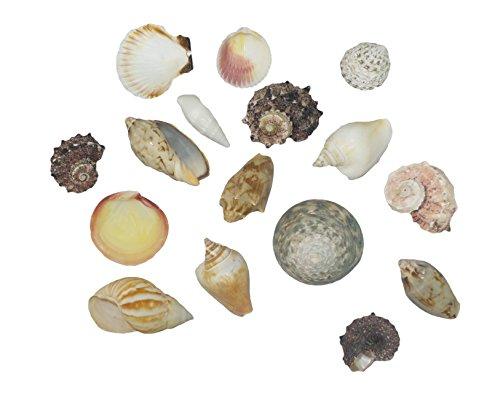 Sea Shells In Net Bag - Natural