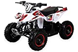 Actionbikes Motors Kinder Miniquad Fox XTR 49 cc - Scheibenbremsen