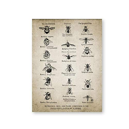Cqzk Vintage Bienen Poster Hummeln Fliegen Drucken Insekt Illustration Entomologie Wandkunst Leinwand Malerei Bildung Wissenschaft Wanddekor 30x40 cm kein Rahmen