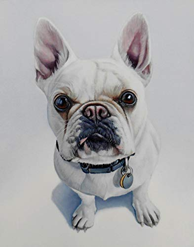 5D Diamond Painting Kit for Adults Kids Lovely White French Bulldog DIY Arts Craft for Home Wall Decor Birthday Gifts