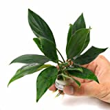 レオパのケージを綺麗にレイアウトしたい!設置できる植物・インテリアまとめ - レオパのケージを綺麗にレイアウトしたい!設置できる植物・インテリアまとめ