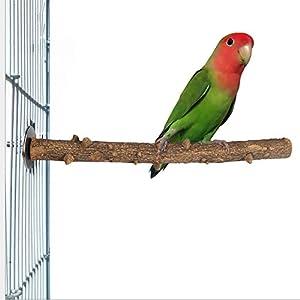 Parrot Essentials - Clavo para pájaros (tamaño Grande), diseño de ...