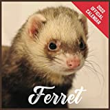 Calendar 2022 Ferret: Ferret Official 2022 Monthly Planner, Square Calendar with 19 Exclusive Ferret Photoshoots from July 2021 to December 2022