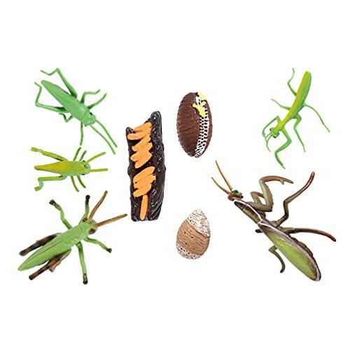 BESPORTBLE 2 Juegos de Figuras de Insectos Ciclo de Vida de Stag Mantis Y Grillo de Plástico de Seguridad Figuras de Insectos Kit de Juguete Orugas a Mariposas Proyecto Escolar Educativo