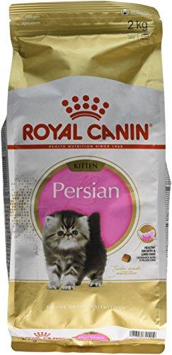 ROYAL CANIN Katzenfutter Feline Kitten Persian 32, 2 kg, 1er Pack (1 x 2 kg)