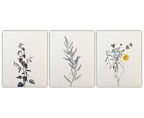 Beige Botanical Wall Art Prints - Set of Three (8x10) Unframed Pictures For Home, Office, Dorm & Chic Bedroom Decor - Great Gift Idea Under $15