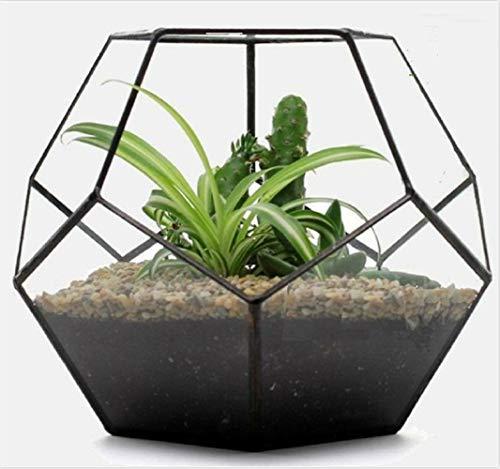 Asvert Geometrische dekorative Terrarium Cube geneigte Klarglas Pflanzer Tischplatte schwarz kleine Air Plant Halter Display Box saftige Moos Blumentopf Container (style8)