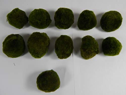 SAHAWA Mooskugeln im Set 3-5 cm, Cladophora aegagropila, Cladophora-Ball, Marimo, Algenball, Wasserfplanzen