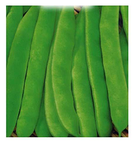 400 c.ca nassau bruine bonenzaden - phaseolus vulgaris - in originele verpakking - gemaakt in italië - bonen - fg021