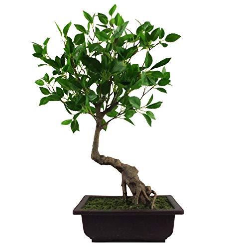 Leaf Hoja 50cm Artificial Ficus Bonsai Árbol, 60 cm