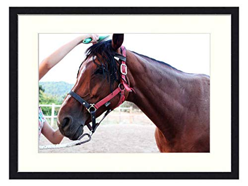 OiArt Wall Art Print Wood Framed Home Decor Picture Artwork(24x16 inch) - Horse Trim Comb Horse Brushing A Horse Brown Horse