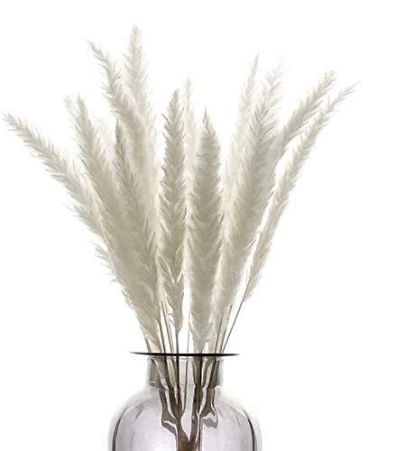 HIQE-FL Pampas Grass Secas,Pampas Grass Artificial,Pampas Grass Decoracion,Hierba de Pampa Natural,Ramos de Pampas,Hierba de Pampa Seca,Hierba de Pampa Decoracion(20pcs)