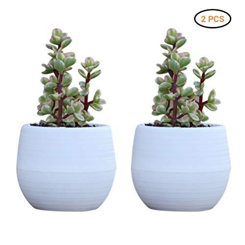Macabolo 2 stuks kleurrijke mini kunststof sappig groene plant pot cactus plant pot bloempot container planter tuin huis decoratie pot wit