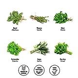 Zoom IMG-1 kit 6x semi piante aromatiche
