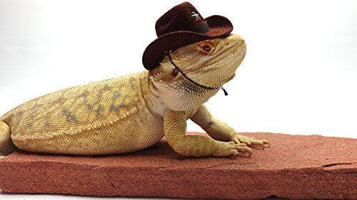 Carolina Designer Dragons' Bearded Dragon Cowboy Hat, Brown