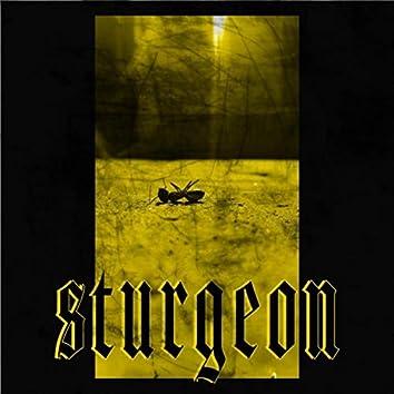 Sturgeon