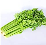 250 Pezzi Semi Di Sedano Sedano Verde Sapore Forte Fresco Giardino All'aperto Piantare Pieno Di Orto Può Essere Raccolto Per Molti Anni