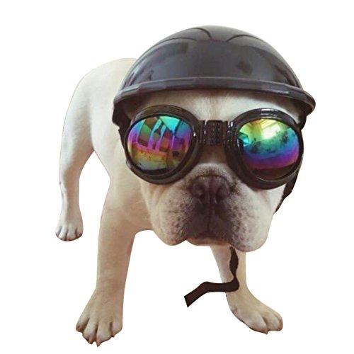 PanDaDa Hundekappe im Biker-Look