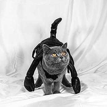 Kabxhueo Costume pour Chat Halloween Deguisement Chien Vêtements de Scorpion pour Chats Textiles et Accessoires pour Petits Chiens, Chats,M