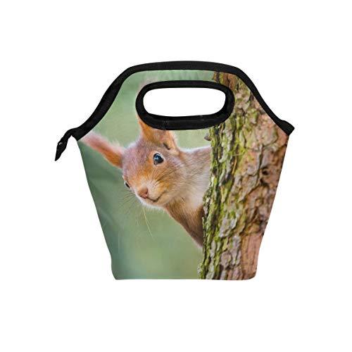 Hunihuni Kühltasche mit niedlichem Tier, Eichhörnchenbaum, isoliert, für Mittagessen, Kühltasche, auslaufsicher, Bento-Box, Handtasche, Lunchbox mit Reißverschluss für Schule, Büro, Picknick