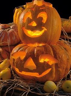 Kürbis Laternenkürbis Halloween Kürbis Sankt Martin Samen