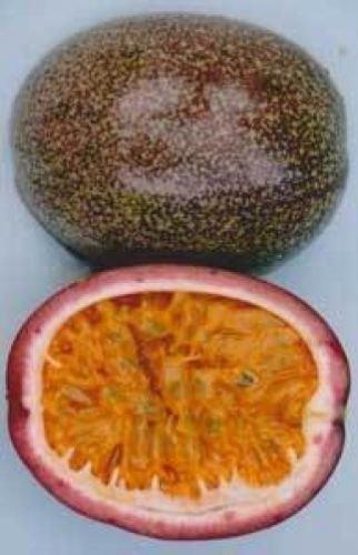 Choix 10 graines de Passiflora Don