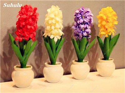 Livraison gratuite Parfum Pas Cher Graines jacinthe, plantes en pot purifient l'air, PC de bureau Décor-100 Pcs Hyacinthus Orientalis Seed 5