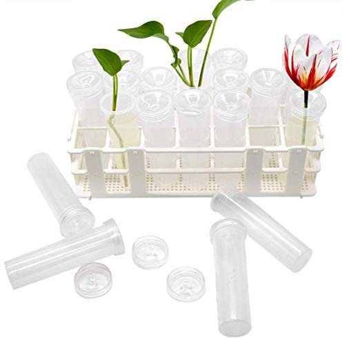 21 Pack Floral Water Tubes with Rack Holder Flower Vials Water Container for Flower Arrangements, Milkweed Cuttings