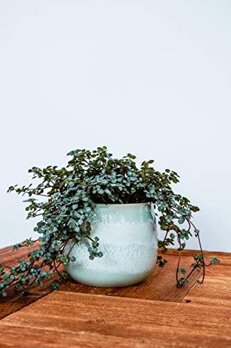 Ivyline Verin Mint Planter D12cm