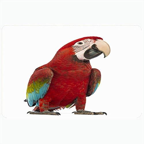 Alfombra de baño para baño Alfombrillas antideslizantes Cortadas Guacamayo de alas verdes Pájaro Ara Young Studio Away Looking Shot Chloropterus 1 año Animales Vida silvestre Felpa Decoración Felpudo