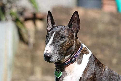 Bull Terrier Perro de Animales Caninos de pura Raza de la mascota Lindo Juegos de Rompecabezas para Adultos 1000 Pieza,Madera Rompecabezas de la Familia de que el Juego de la Colección de Juego Educa