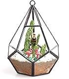 Jardinera de vidrio - Terrario de vidrio colgante de 5.5 pulgadas, moderno...