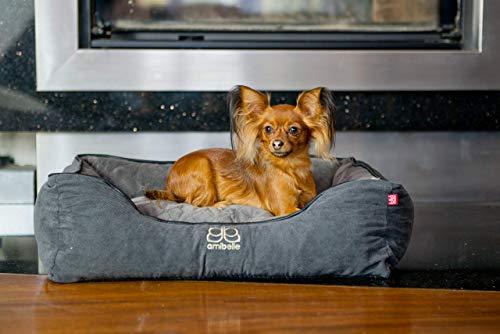 BOUTIQUE ZOO Premium Orthopädisches Hundebett   Größe M: 60 x 50 x 19 cm   Bett für Hunde oder Katzen   Hundesofa, Hundekissen, Hundeliege   abwaschbar Hundekorb   Thermo Isolierung   Farbe: Grau