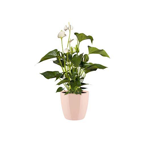 ELHO bloempot bruisjes diamond, rond 16 cm Flowerpot. 16 cm nude