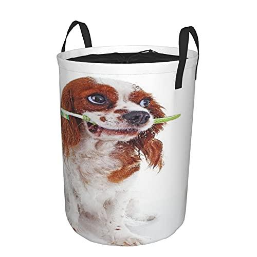 Cesta de almacenamiento, perro con cepillo de dientes, cesto de lavandería grande plegable con asas 19'x14'