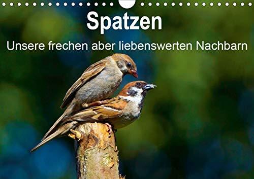 Spatzen, unsere frechen aber liebenswerte Nachbarn (Wandkalender 2021 DIN A4 quer)