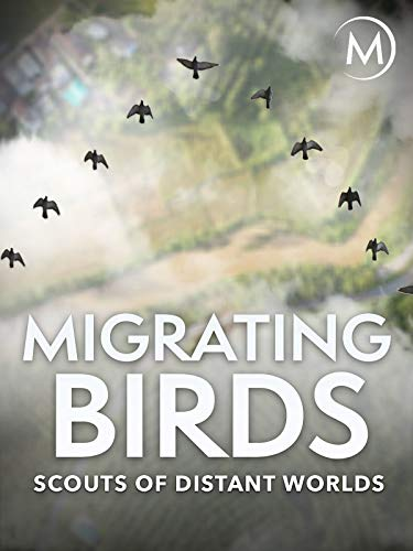 Migrating Birds: Scouts of Dista...