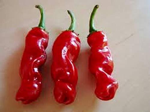Portal Cool Peter Chili, Chili, Pfeffer, Hot, Fruchtig, Rare, Saatgut, Samen