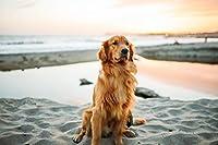 ジグソーパズル1000ピース ゴールデンレトリバーの砂はかわいい犬の動物に座っています パズル ゲーム パズルパズル ゲームうさぎ パズル大人と子供のための創造的な贈り物家族の楽しいゲーム