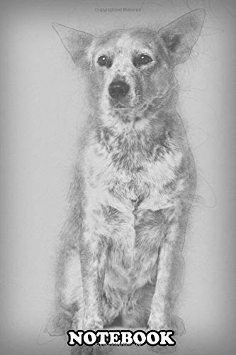 Notebook: Australian Cattle Dog 2 Years Old Sitting , Journal for Writing, College Ruled Size 6