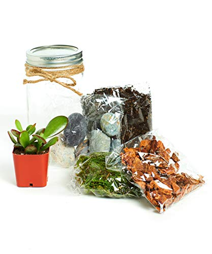 Mason Jar Terrarium Kit